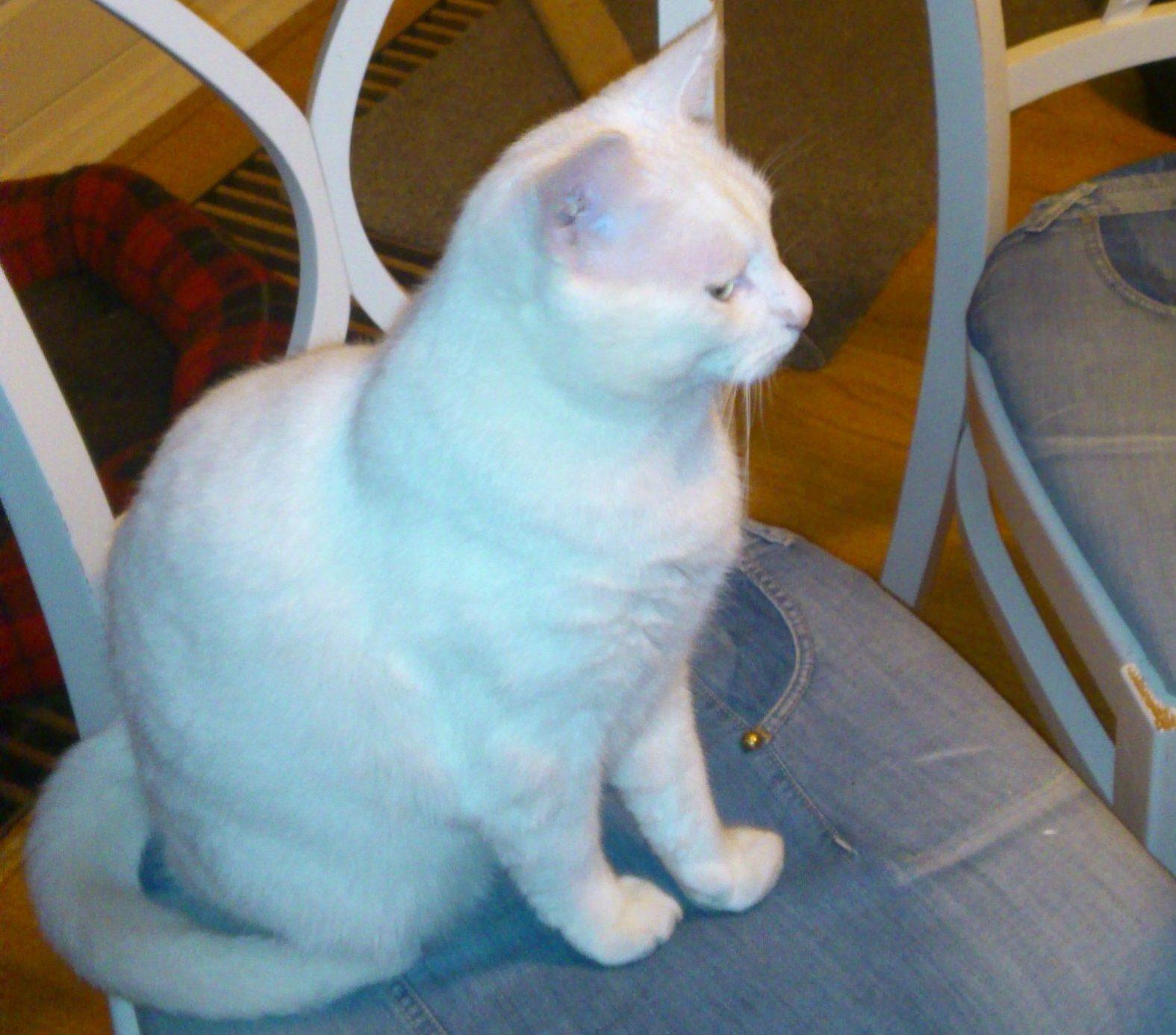 Praktijk De Witte Kater, natuurgeneeskunde voor dieren